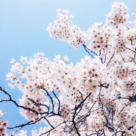 london spring blossom