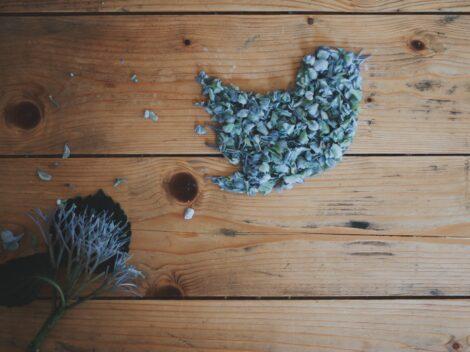 petal twitter logo